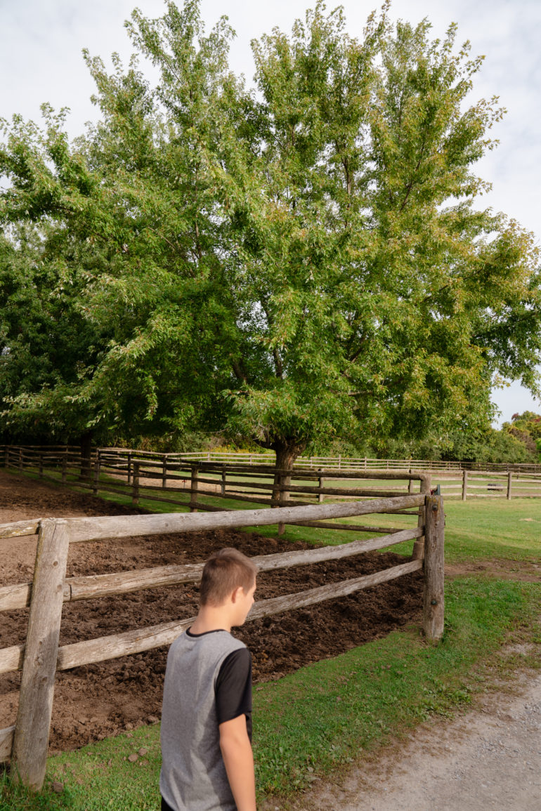 Luca Blue Silva at WindReach Farm