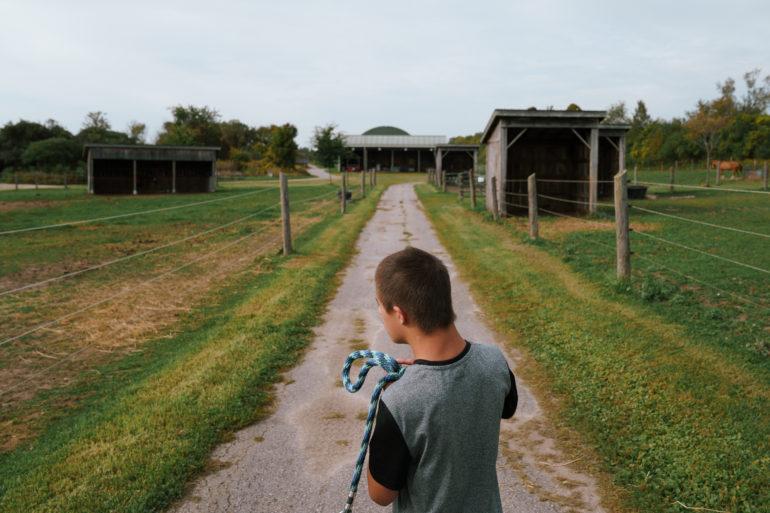 Luca Blue Silva at WindReach Farm